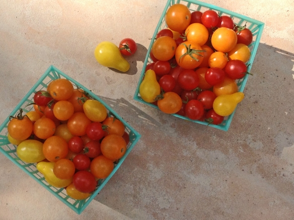 SUMMER TOMATOES 1