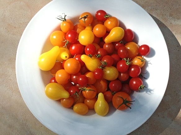 SUMMER TOMATOES 2